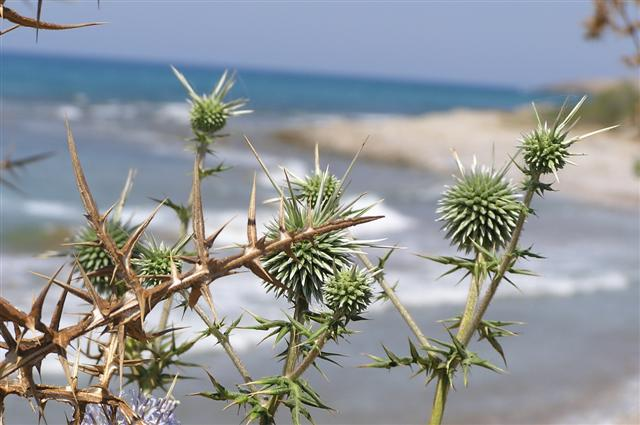 Natural Life in North Cyprus